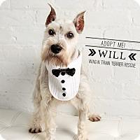 Adopt A Pet :: Will - Omaha, NE
