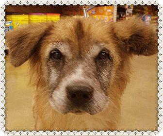 Retriever (Unknown Type) Mix Dog for adoption in Marietta, Georgia - SAM (R)