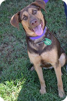 German Shepherd Dog/Rottweiler Mix Dog for adoption in Beaumont, Texas - Onna