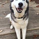 Adopt A Pet :: Orion