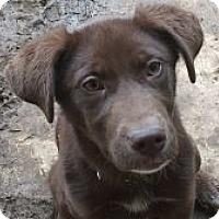 Adopt A Pet :: Dora - Evergreen, CO