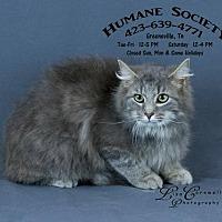 Adopt A Pet :: Fluff / AC-18452 - Greeneville, TN