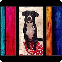 Adopt A Pet :: Tonto - Duchess, AB