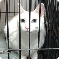 Adopt A Pet :: Blanca - Lexington, MO