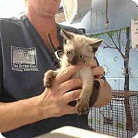 Adopt A Pet :: A504449 - San Bernardino, CA