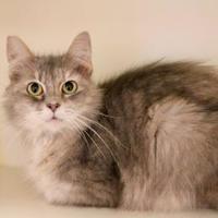 Adopt A Pet :: Bluray - Chattanooga, TN