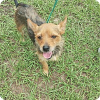 Adopt A Pet :: Minnie - Tavares, FL