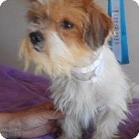 Adopt A Pet :: CS-8 - Yucaipa, CA