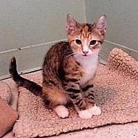 Adopt A Pet :: Elsa - Port Clinton, OH