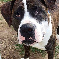 Adopt A Pet :: Willy - Prospect, CT