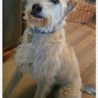 Adopt A Pet :: Watson - Cherry Valley, CA
