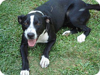 Border Collie Mix Dog for adoption in ROCKMART, Georgia - DAISY