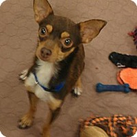 Adopt A Pet :: Jagger - yes, he has the moves - Phoenix, AZ