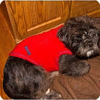 Adopt A Pet :: Sebastian - Richmond, VA