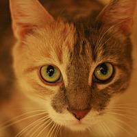Adopt A Pet :: Gigi - Canoga Park, CA