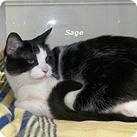 Adopt A Pet :: Sage - Dover, OH