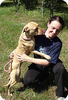Shar Pei/Terrier (Unknown Type, Medium) Mix Dog for adoption in Jefferson, Texas - Macy