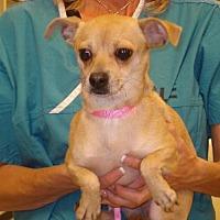 Adopt A Pet :: dixie - Tonopah, AZ