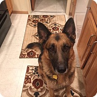Adopt A Pet :: Leo*ADOPTION PENDING* - Mill Creek, WA