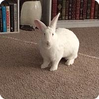 Adopt A Pet :: Milkshake - Williston, FL