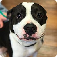 Adopt A Pet :: Dylan - Dayton, OH