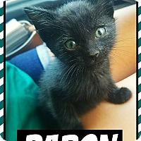 Adopt A Pet :: Baron - Edwards AFB, CA