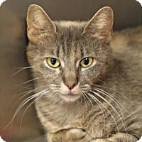 Adopt A Pet :: Hedwig - Bryan, TX