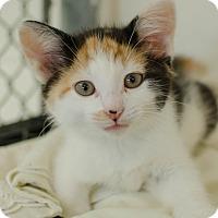 Adopt A Pet :: Clara - Greenwood, SC