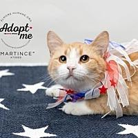 Domestic Shorthair Cat for adoption in Wetumpka, Alabama - 70688 Martina