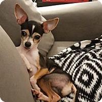Adopt A Pet :: Louie - Santa Fe, TX