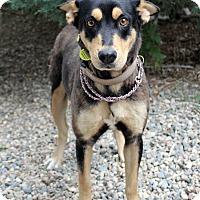 Adopt A Pet :: Lillian - Westminster, CO