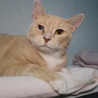 Adopt A Pet :: Buster - New Freedom, PA