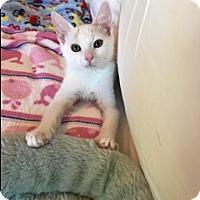 Adopt A Pet :: Murphy - Walnut Creek, CA