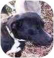 Labrador Retriever/Boxer Mix Dog for adoption in Newington, Connecticut - Oscar