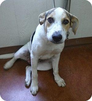 Hound (Unknown Type) Mix Dog for adoption in East Hartford, Connecticut - corndog-Pending Adoption