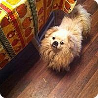 Adopt A Pet :: Buddy - Paintsville, KY