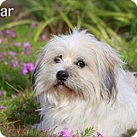 Adopt A Pet :: Oscar - Flowery Branch, GA