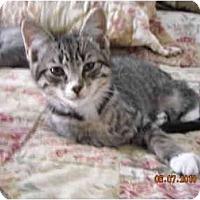 Adopt A Pet :: Bailey - Riverside, RI