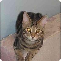 Adopt A Pet :: Samuel - Montreal, QC