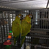 Adopt A Pet :: Zane & Lilo - Punta Gorda, FL