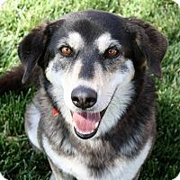 Adopt A Pet :: Star - Yorba Linda, CA