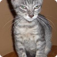 Adopt A Pet :: Blue Baby - Dallas, TX
