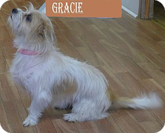 Terrier (Unknown Type, Small) Mix Dog for adoption in Manning, South Carolina - Gracie