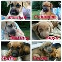 Adopt A Pet :: Muffin - Marlton, NJ