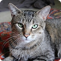 Adopt A Pet :: Hugh Jackman - Chicago, IL
