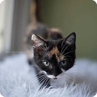 Adopt A Pet :: Sassafras - San Jacinto, CA