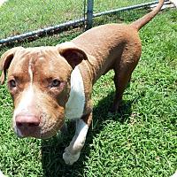 Adopt A Pet :: Donnie - Terrell, TX