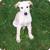 Adopt A Pet :: Norman - Rexford, NY