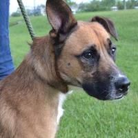 Adopt A Pet :: SASQUATCH - Thomasville, GA