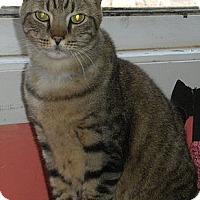 Adopt A Pet :: Henry - Washington, VA